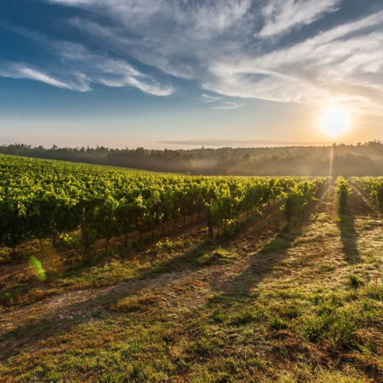 Vineyard in The Hamptons for Wine Tasting Tours